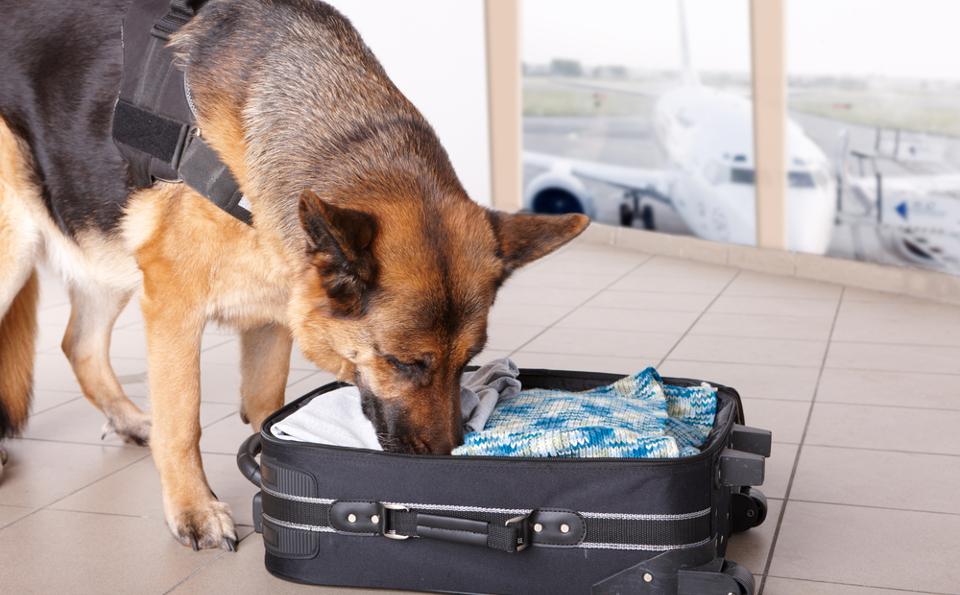 dog abroad UK holidays